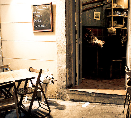 Hungry dog, outside a bar in Gijon.