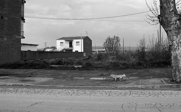 Dog and house, Humanes (next to the petrol station)
